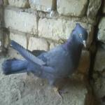 پرنده ها